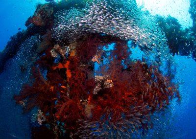 Underwater-04