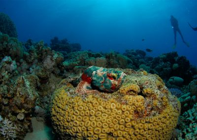 Underwater-13