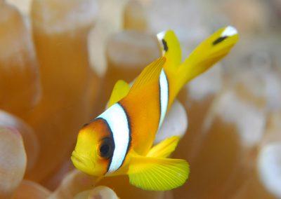 Underwater-18