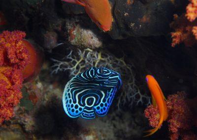 Underwater-20