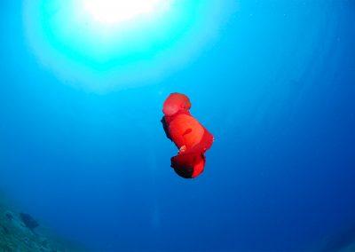 Underwater-24