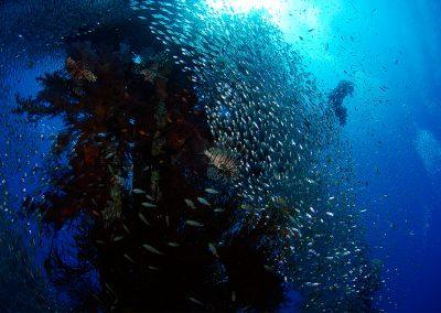 Underwater-25