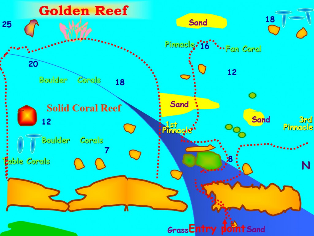 Golden Reef Red Sea Dive Site Aqaba
