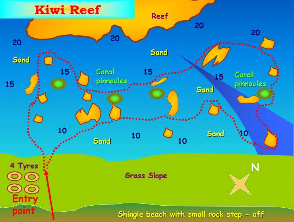 Kiwi Reef Dive Site Aqaba